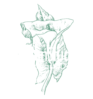 The Garden Studios | Yoga and Alternative Therapies. Bridport. Dorset.